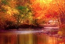 Autumn / by Brittney Huff