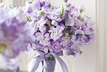 Lavender Fairy Dust / purples...lavenders...violets... / by Tammy Pritchard