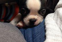Rocco <3