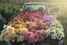 Flowers / Let yourself be inspired by the wonderful and magical world of flowers. //  Déjate inspirar por el maravilloso y mágico mundo de las flores y la decoración...