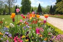 Garden Style / Garden inspirations, landscaping, outdoor projects, flower beds, patios, design ideas, color inspiration.