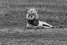 Animal L♥VE / My L♥VE for animals runs deep..a few shots that capture my heart. / by marcellaINC + PopUp Rem!x