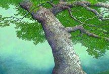Arboreal Splendour / by Lesley West