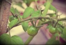 Garden / by Christine