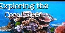 Coral Reef / Studying all the magnificent things about coral reef. Unit study and lapbook for coral reef. #homeschoolscience #handsonscience