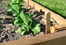 Huerto urbano / Ideas para dar vida a un huerto urbano, porque no es necesario vivir en el campo para poder cultivar nuestros propios alimentos
