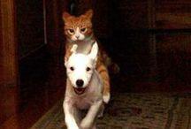 Cat Love / I love cats
