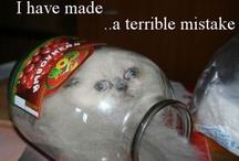 things that make me giggle / by Lishia Zinszer