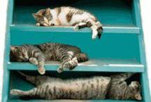 Organizing Your Cat (s)