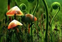 In My Magical Garden / by Donani