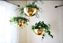 Planters / by Olivia Headpieces