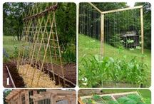 Gardening Up (Heirlooms only) / Helps, hints & tricks for my garden. We will be gardening up this year. Using trellises, fences & teepees / by Renee Brockett