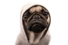 Pug Life / by Lindsey Costello