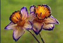 Orchid & Plants