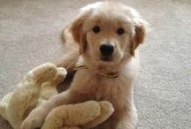 Adorable animals / The cutest canines on the planet. / by AOL Lifestyle