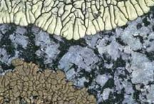 Design in Nature / by Carolyn Lancaster