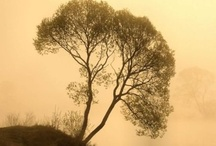 Trees / by Tate Embree