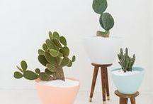 plant.