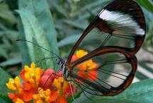 Natureza - animais, aves, insetos...