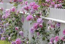 Garden~Yard~Flowers~Porches / by Jan Martin