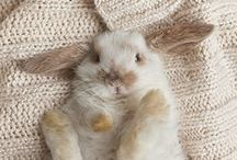 Cute Animals / by Kristynnn