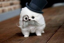 Whisker Wars (My obsession with mustaches and beards) / by Diana Farley