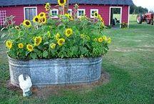 Gardening / by Kailyn Baum