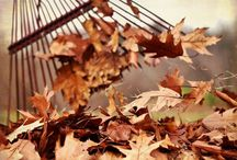 Fall / My most favorite time of the year.   I love, LoVe LOVE Fall!