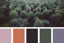 COLOR PALETTE INSPIRATION / Images found in nature and within our environment that inspire color palettes