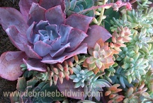 """* Amazing SUCCULENTS & Sedum / This board is mostly single succulents and sedum, with identification and information. See my board """"* SUCCULENT Containers, Wreaths, Walls, Etc."""" for succulent container gardens, landscape, arrangements, etc. Yes, I'm obsessed with succulents! These fleshy, water-storing plants come in many unique varieties of color, texture, and form, providing endless possibilities for a collector of these fascinating plants.  / by Patti Nan"""