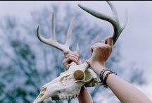 Masks 'n Animal Heads / #masks #animals