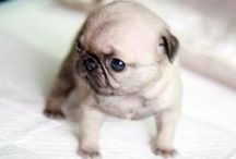 Cuteness Overload / Cute pets, cute puppies, cute kittens and even cute piggies! It's all about cuteness overload! / by Crashing Red