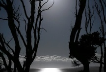 By the light of the Silvery Moon... / by Carol Fraile