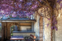 WYSTERIA, LILACS & BOUGAINVILLEAS / by Joyce Comer