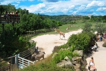 Zoo Praga