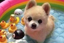 Cute and Tender / Cute Animals, Cute kittens, micetti, gattini, cuccioli, cagnolini, coniglietti, pets, rabbits, animals, animali, babies, baby, bambini, tenerezza,