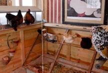 Chickens - Coop de Ville / Coops and coop accessories