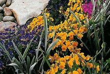 back yard / Backyard ideas so many ...where to start?? / by Christy Ahdan