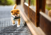dogs / by sao