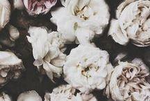 FLORAL / by Bare Root Girl | Angela Gallardo