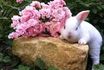 ★ Easter Ideas ★