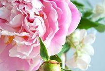 Fiori Flowers Fleurs / fiori, flowers, fleur, piante, giardini, garden, ikebana, peonie, peonies,