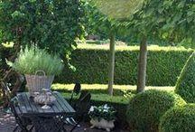 Garden / by Helene