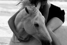ExquisiteEquestrian  / power | elegance | strength | speed | grace | mystique | beauty