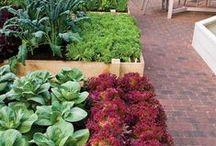 Horta urbana / Espécies vegetais e dicas para agricultura urbana.