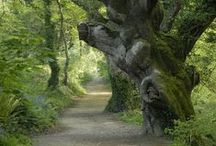 DAY TRIPS - LOST GARDENS OF HELIGAN / About 62 miles ( 1 hr 30 mins drive).