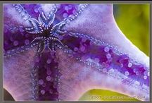 Purple Royalty~