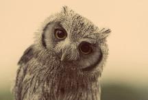 Owl / by Reiné Gadellaa