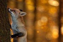 Wildlife / Wildlife, animals