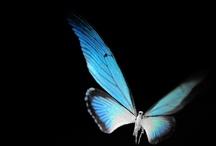 Alive / Flora, flutterbys